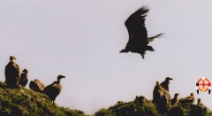 vautours-Fv-.jpg